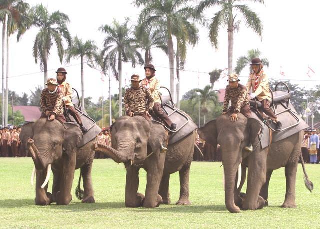 Tiga Gajah Iringi Pembukaan Perkemahan Bakti Saka Kalpataru-Saka Wanabakti di Siak Riau